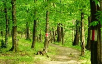 Peste 5.100 de hectare de padure au fost incluse in categoria celor virgine. Catalogul padurilor a fost actualizat