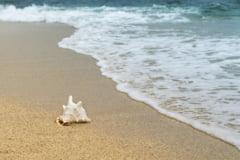 Peste o suta de plaje din Brazilia, poluate cu petrol