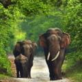 Pesticidele, excluse de pe lista posibilelor cauze ale mortii a sute de elefanti in ultimele luni din Botswana