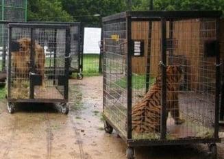 Petitia pentru interzicerea folosirii animalelor la circ, semnata in cateva ore de peste 16.200 de oameni