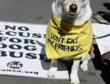 Petitie in Elvetia: Nu mai mancati caini si pisici!