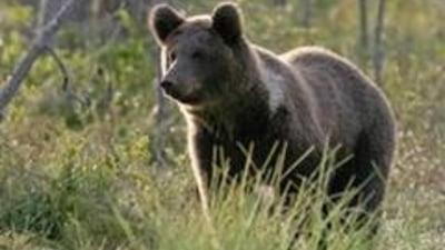 Petre Roman, speriat de un urs la Sinaia (Video)