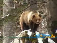 Petre Roman, speriat de un urs la Sinaia