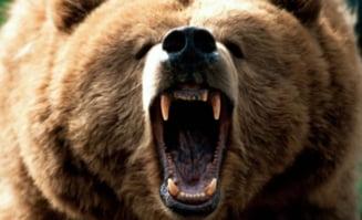Piciorul de om din bagajul de pe Otopeni este, de fapt, o laba de urs?
