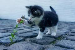 Pisica aruncata dintr-un balcon, la Bacau, a supravietuit. Ce pedeapsa a primit adolescenta care a comis fapta