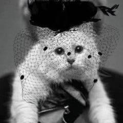 "Pisica mostenitoare a lui Karl Lagerfeld a ramas in grija uneia dintre ""asistentele"" ei personale"