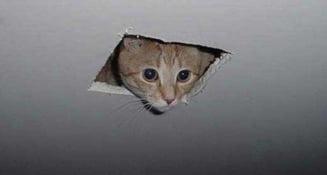 Pisica-spion CIA, pisica inaripata si alte vedete codate (Video, Galerie foto)