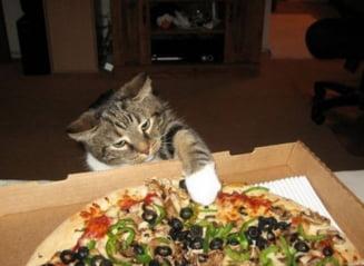 Pisici curajoase, trecute prin intamplari iesite din comun