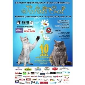 Pisici de zece! Expozitia internationala Felina de Primavara