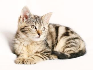 Pisicile care dorm in pat cu stapanii infectati cu COVID-19 pot lua mai rapid virusul. Ce se intampla cu celelalte animale de companie STUDIU