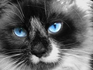 Pisicile si cainii, interzisi in capitala Arabiei Saudite