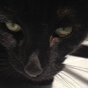 Pisicile ucigase - omoara miliarde de animale anual