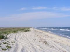 Plajele Vadu si Corbu vor avea regim special de protectie