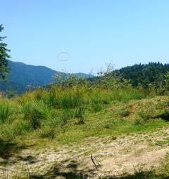 Planorul disparut in munti in luna august a fost gasit in padure - pilotul, prins inauntru