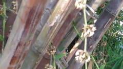 Planta cu cel mai rapid ritm de crestere din cate exista: un mm la fiecare doua minute