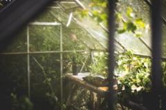 Plante care pot curata aerul poluat, in locuintele noastre