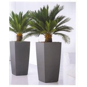 Plante decorative naturale la birou investitii in oameni for Plante decorative exterieure