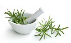 Plante medicinale usor de ingrijit