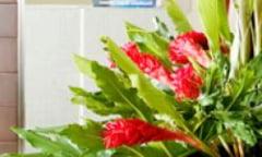 Plantele de apartament - sfaturi de ingrijire