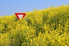 Plantele modificate genetic, cultivate in zone protejate - lege aprobata de Parlament