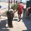 Politia Locala a confiscat doi ponei in statiunea Mamaia. Animalele erau inchiriate turistilor pe plaja