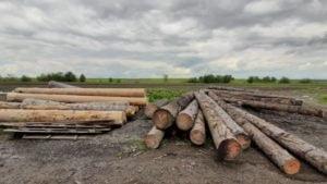 Politistii brasoveni au confiscat material lemnos de aproape 25.000 de lei, de la o societate din Sinca Veche