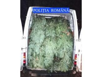 Politistii din Neamt au facut prima captura de brazi din acest an