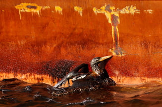 Poluarea din Golful Mexic, mult mai grava decat s-a crezut