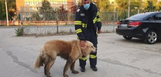 Pompieri cu inima mare, salvatori de oameni si animale deopotriva. Caine recuperat dintr-un canal de angajatii ISU la Timisoara. Foto