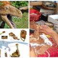Povestea Balaurului bondoc, cel mai complet schelet de dinozaur carnivor descoperit în Europa FOTO