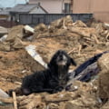 "Povestea emotionanta a unui caine din Suceava. A continuat sa pazeasca o casa timp de trei ani dupa ce i-au murit stapanii: ""Este chel, slab, si fara dinti"""