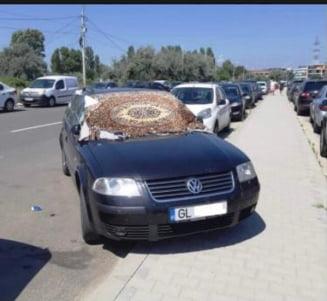 Poza zilei: Un turist din Mamaia folosește un covor în loc de parasolar