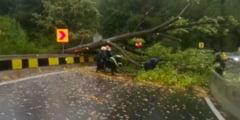 Prahova: Copaci doborati de vant in zona de nord a judetului si apa pe carosabil in Sinaia