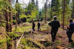 Prejudiciu de proportii cercetat de politisti in padurea de la Belis: sute de arbori taiati ilegal
