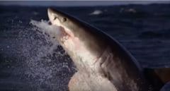 Premiera in adancuri: Comportament atipic afisat de doi rechini albi