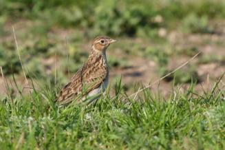Premiera in justitie: O instanta a oprit vanatoarea a 4 specii de pasari