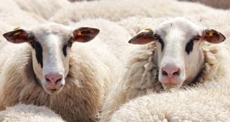 Premierul Florin Cîțu anunță că transportul de animale vii se suspendă pe perioada caniculei