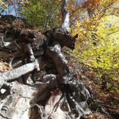 Presa franceza: In Romania, copacii pot striga dupa ajutor cand aud drujba