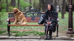 Presa straina, despre cainii fara stapan: Condamnare la moarte pentru maidanezii din Romania