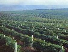 Presedintele Asesoft a preluat vinurile Rotherfield