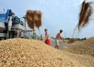 Pretul graului scade, pe fondul secetei din Rusia