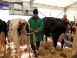 Pretul laptelui ar putea exploda din cauza regulilor UE. Cat va ajunge sa coste un litru