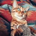 Prietenia neobisnuita intre un arici si o pisica bengaleza. Cei doi nici nu sesizeaza ca nu fac parte din aceeasi specie! (Galerie foto)