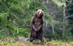 Prima autostrada ecologica din Romania: Cum faci ursul sa intre in tunel - Interviu