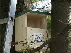 Prima casa pentru pasari cantatoare, in parcurile bucurestene - Ce specii va adaposti