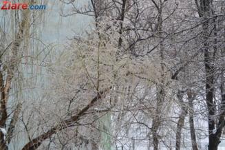 Prima ninsoare de noiembrie in Tokio dupa 54 de ani (Galerie foto)