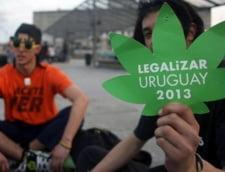 Prima tara din lume care legalizeaza cultivarea, vanzarea si consumul de marijuana