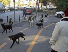 Primar intr-un oras unde nu exista caini vagabonzi: Referendumul din Bucuresti e o porcarie
