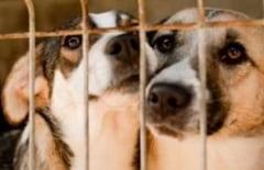 Primaria Capitalei: Mai sunt 20.000 de caini pe strazi. 34.000 au fost capturati din septembrie 2013