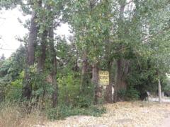 Primaria Capitalei face parc in Prelungirea Ghencea, dupa un vot cu scandal in care Firea s-a simtit tradata de Tudor Ionescu